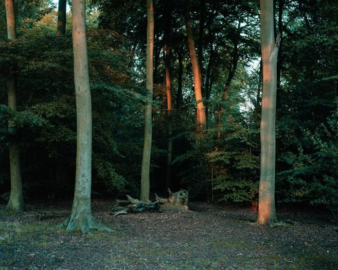 Castle Wood-001