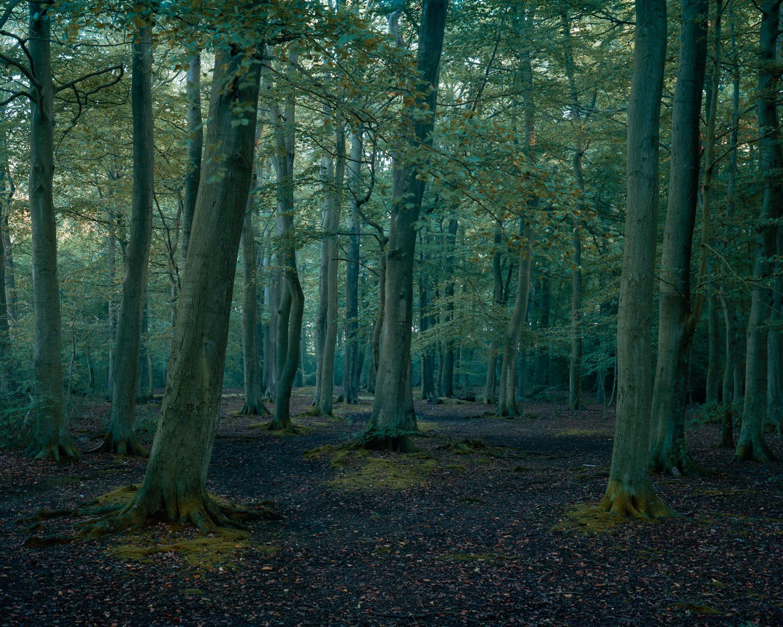 Castle Wood-004