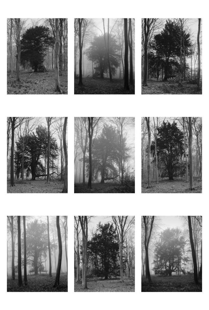 Yew Trees